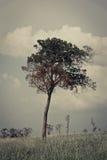 孤立的树 免版税库存图片