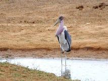 孤立的鸟 库存图片
