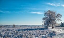 孤立积雪的树 免版税库存照片