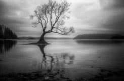 孤立结构树在湖 免版税库存照片