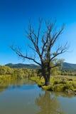 孤立结构树 免版税库存照片