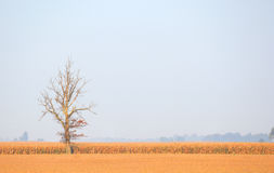 孤立结构树 免版税库存图片