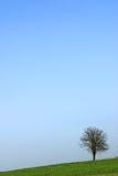 孤立结构树 库存图片