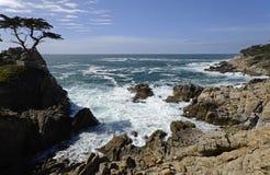 孤立赛普里斯, 17英里推进,加利福尼亚,美国 库存照片