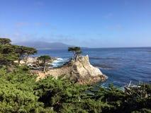 孤立赛普里斯, Pebble海滩加州 免版税库存图片