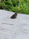 孤立青蛙 库存照片