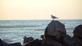 孤立鸥坐一个岩石在天际的海在清早 股票录像