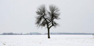 孤立结构树在冬天 免版税库存照片