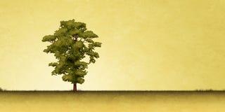 孤立结构树 免版税图库摄影