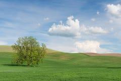 孤立结构树 库存照片