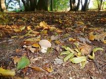 孤零零偏僻的伞菌 库存图片