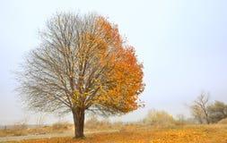 孤零零唯一树 库存照片