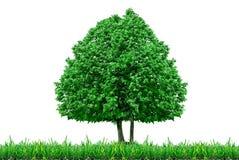 孤零零在白色背景隔绝的树和草 库存照片