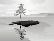 孤零零杉木的岩石 库存图片