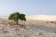 孤零零沙漠的绿色植物 图库摄影