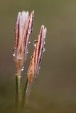 孤零零的银莲花属 库存图片