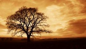 孤零零结构树 免版税库存图片