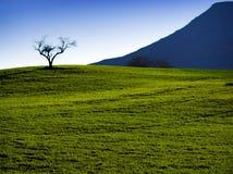 孤零零结构树 免版税图库摄影