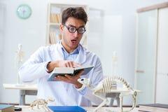 学习动物骨骼的滑稽的疯狂的学生医生 库存图片