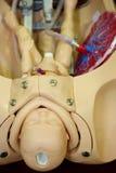学习培训的医学模型学员 库存照片