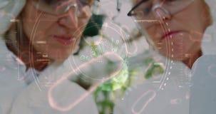 学习微观有机体的4k的植物学家一片叶子 股票视频