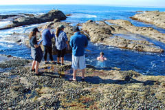 学习海洋生物的Maraine生态学家在新月形海湾,拉古纳海滩,加利福尼亚附近 免版税库存照片
