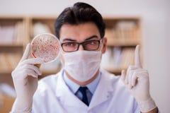 学习病毒细菌的医生在实验室里 免版税库存图片