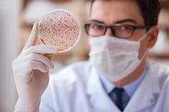 学习病毒细菌的医生在实验室里 图库摄影