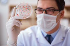 学习病毒细菌的医生在实验室里 免版税图库摄影