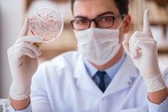 学习病毒细菌的医生在实验室里 库存照片