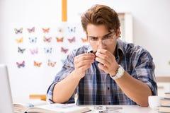 学习蝴蝶的新的种类学生昆虫学家 库存图片