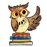 学会与书的猫头鹰 免版税库存照片