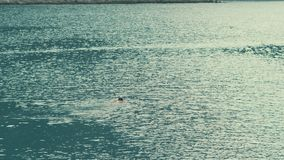 学会的少女游泳蛙泳在海 概念查出的体育运动白色 股票视频
