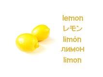 学会许多语言;柠檬 库存图片