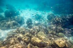 学校在礁石的鱼游泳在海洋 库存图片
