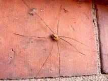 学校蜘蛛 库存照片