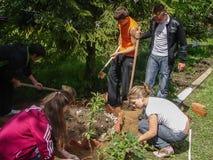 学生工作在校园的在卡卢加州地区在俄罗斯 免版税库存照片