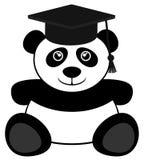 学生熊 免版税库存图片