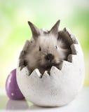 婴孩兔宝宝新出生的兔子贴纸 免版税库存图片