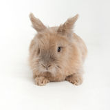婴孩兔宝宝新出生的兔子贴纸 库存照片