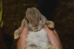 婴孩兔宝宝新出生的兔子贴纸 库存图片
