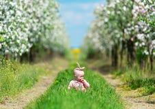 婴孩在一棵草坐在苹果庭院里 库存图片