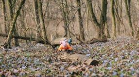 婴孩在森林春天 免版税库存照片