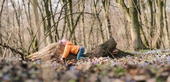 婴孩在森林里 免版税库存照片