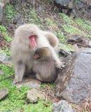 婴孩她的猴子母亲 免版税库存照片