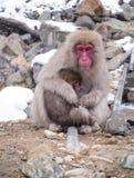 婴孩她的猴子母亲 库存图片