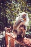 婴孩她的猴子 库存图片