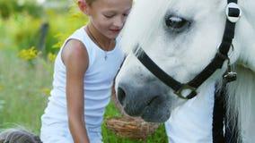 孩子、男孩和七年的女孩,喂养了一个白色小马,给吃红萝卜 快乐,愉快的家庭度假 影视素材