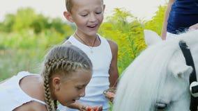 孩子、男孩和七年的女孩,喂养了一个白色小马,给吃红萝卜 快乐,愉快的家庭度假 股票视频