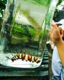 孩子举行的一条被装瓶的毛虫 免版税库存图片